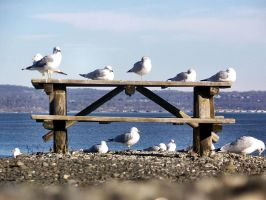 gulls on a table by bipolargenius