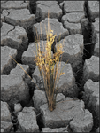 Drought Plant by FlyingV13