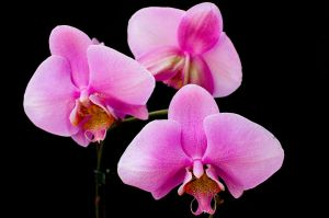 Orchid 2 by violety