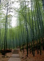 Bamboo by howhowforever