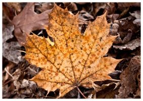 Leaf On The Leaves by tCentric-media