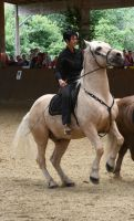 stock excited  horse on a show by Nexu4