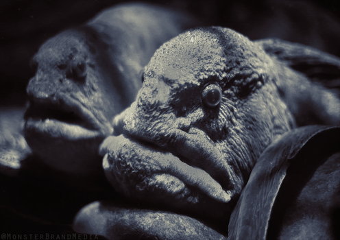 Wolf Eels by MonsterBrand