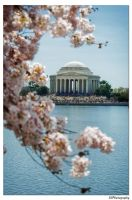 Spring in the Nations Capital by samg1994