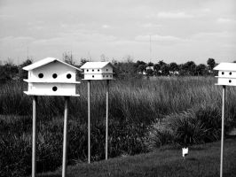 bird houses by TheCauseOf