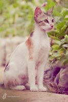 Cat by fahadee