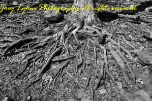 The roots of nature by JoeyLyonsphotography