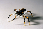 Flameworked Arachnid IV by catchymuffin