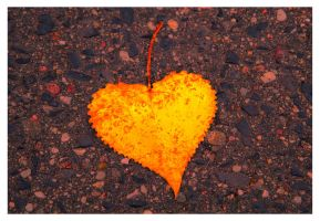 Fallen Leaf Heart by rekokros