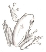 Tree Frog by Leoness