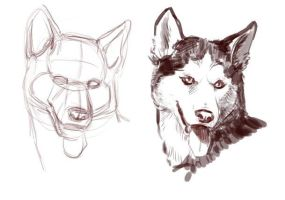 How to draw dogs head by Elruu