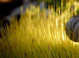 Soft beh-beh grass... by iluvobiwan91