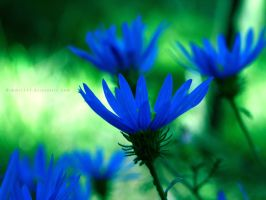 Weeds are flowers too, once you get to know them. by Bimmi1111