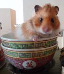 Hamster in Chinese Bowls by munchengirl