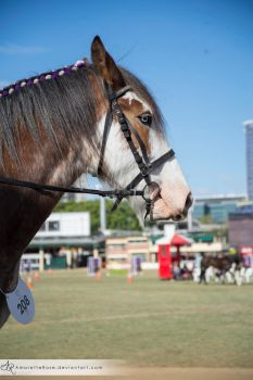 RQS Clydesdale #120 by AmoretteRose