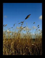 Simplicity of the yellow grass by V-ilya