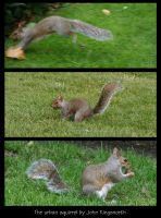 The urban squirrel by earzy88