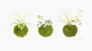 kokedama series by BrokenMasque