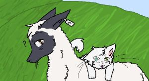 Sheep and Cat by WolfehKitteh