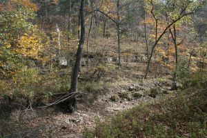 Dry Creek in the Woods by CentiumCuspis