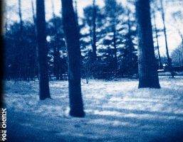 Trees printed in Cyanotype by PhotographybyVictor