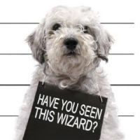 Have you seen this wizard ? by taz-ing