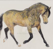 Dun Horse March 1 2013  by kquint