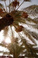 Iraq's Palm by Einas-A