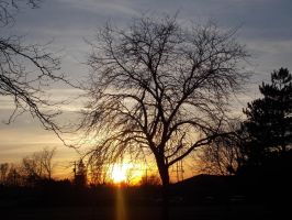 Tree at sunset by FoxHunter361