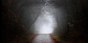 -356- Foggy Autumn Road by MiriamPeuser