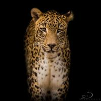 Leopard II by Linkineos