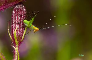 Tiny Grasshopper by Grouper