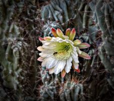 cactus flower by BL00DYSunflowers