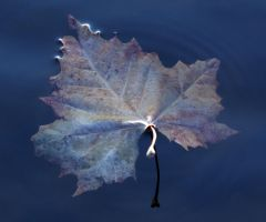 Leaf Ripple by kingkool6