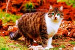 Obesty's Cat.) by MR-Crictical