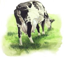 Cow by Sidteles
