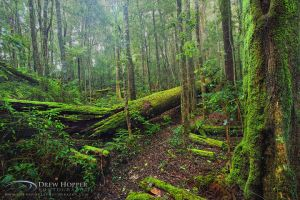 Sassafras Creek Track by DrewHopper