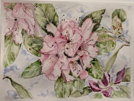 Rhododendrons by mybuttercupart
