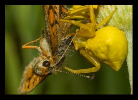 The spider and the butterfly by katerina-m
