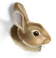 Bunny by Kattling