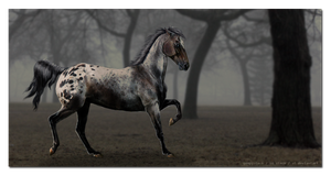 Appaloosa by firefliies