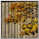 Leaves and shadows... by Yancis