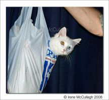 Gone shopping ... for kittens by substar