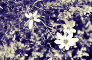 Spring Flowers by Monochrome5