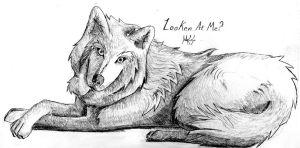 Wolf Look by DragonWolfACe