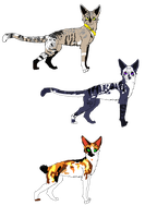 Feline Adoptables. by Swaps-Adopts