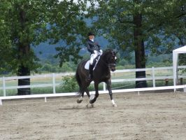 Dressage 2 by DNS-stock