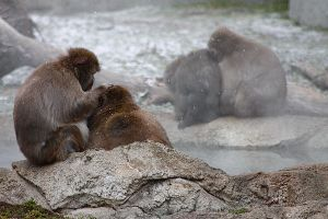 Snow Monkeys 2 by S-H-Photography