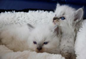 Lilla and her sister again by Midnight-Cardinal