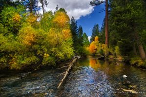 Lee Vining Canyon Autumn by MattGranzPhotography